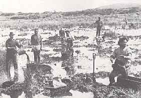 digging swamp for gum: Alexander Turnbull Library