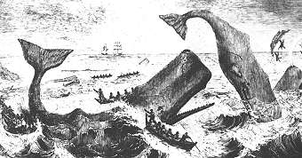 The perils of whaling